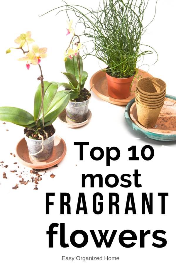 Wie Sie Ihr Haus mit duftenden Zimmerpflanzen gut riechen lassen # duftend # gut #ho ...#duftend #duftenden #gut #haus #ihr #lassen #mit #riechen #sie #wie #zimmerpflanzen