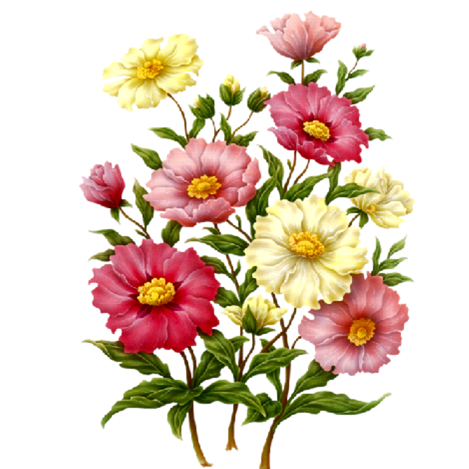 Flowers PNG Flower art, Digital flowers, Botanical flowers