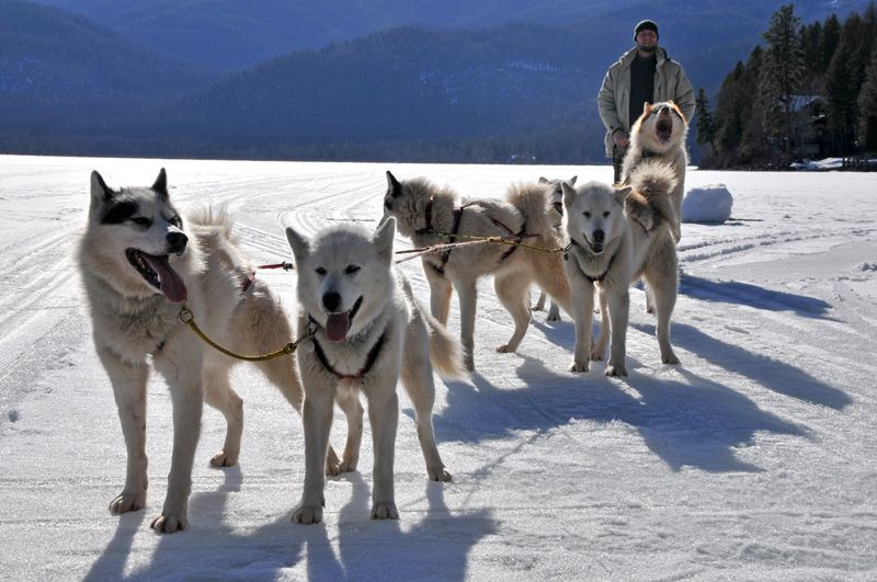Photo of Dog Sledding in Bigfork