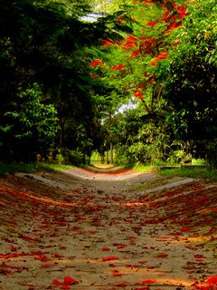 Download Free Love Path Mobile Wallpaper Contributed By Kenyonandrew1 Love Path Mobile Wallpaper Is Uploaded In Natur Mobile Wallpaper Nature Nature Images Hd