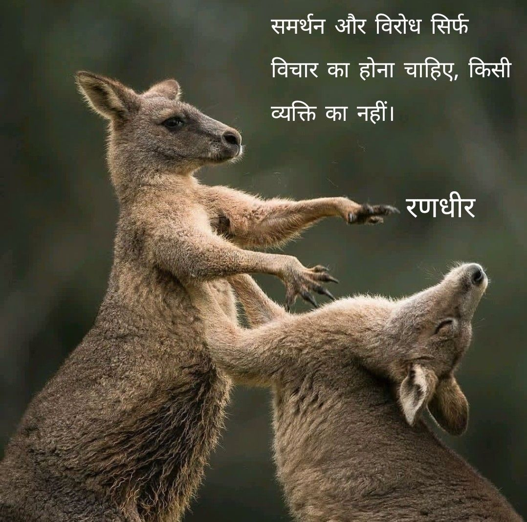 Pin By Premyog On Hindi Quotes Australia Animals Quotes Kangaroo