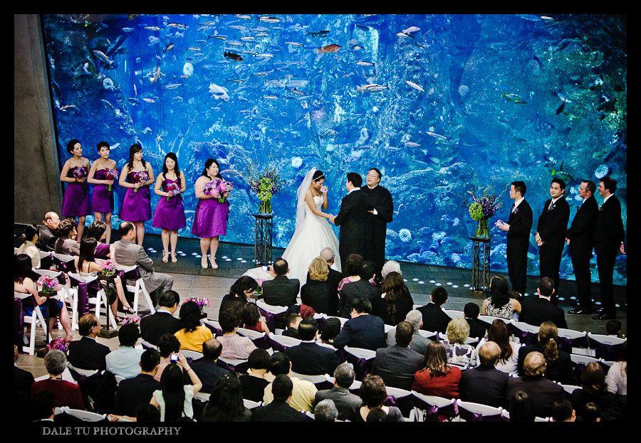 Seattle Aquarium Wedding Weddings Pinterest