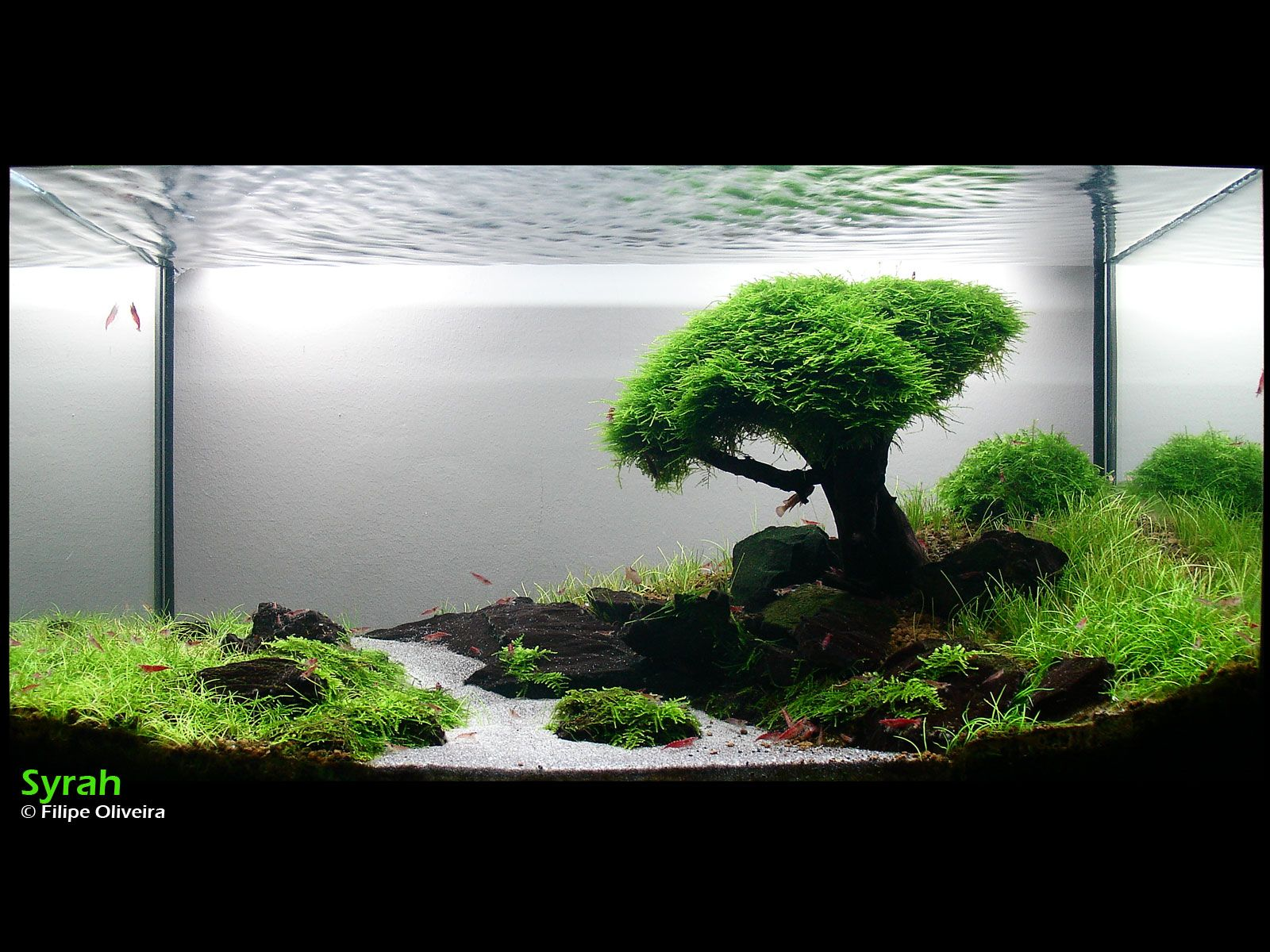 Wow Now That Is A Cool Aquarium Magnifique Aquarium J Aimerais