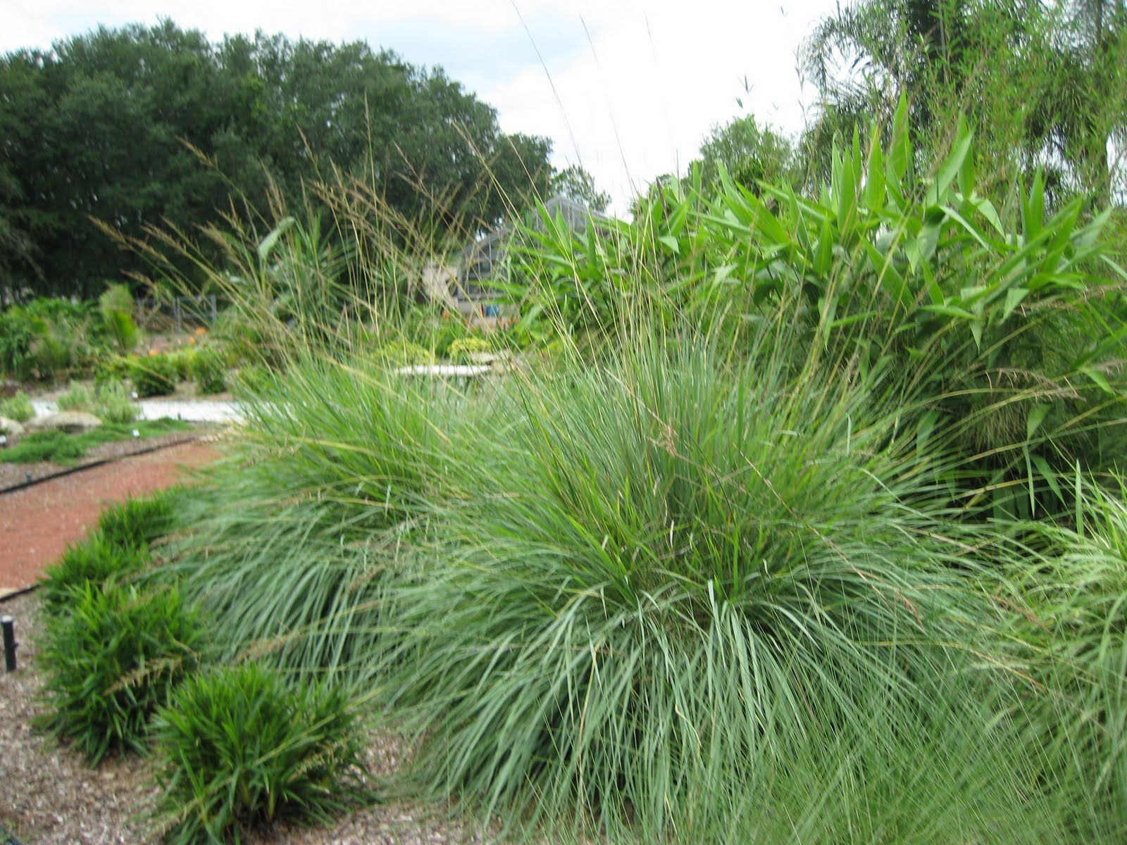 caring for ornamental grasses