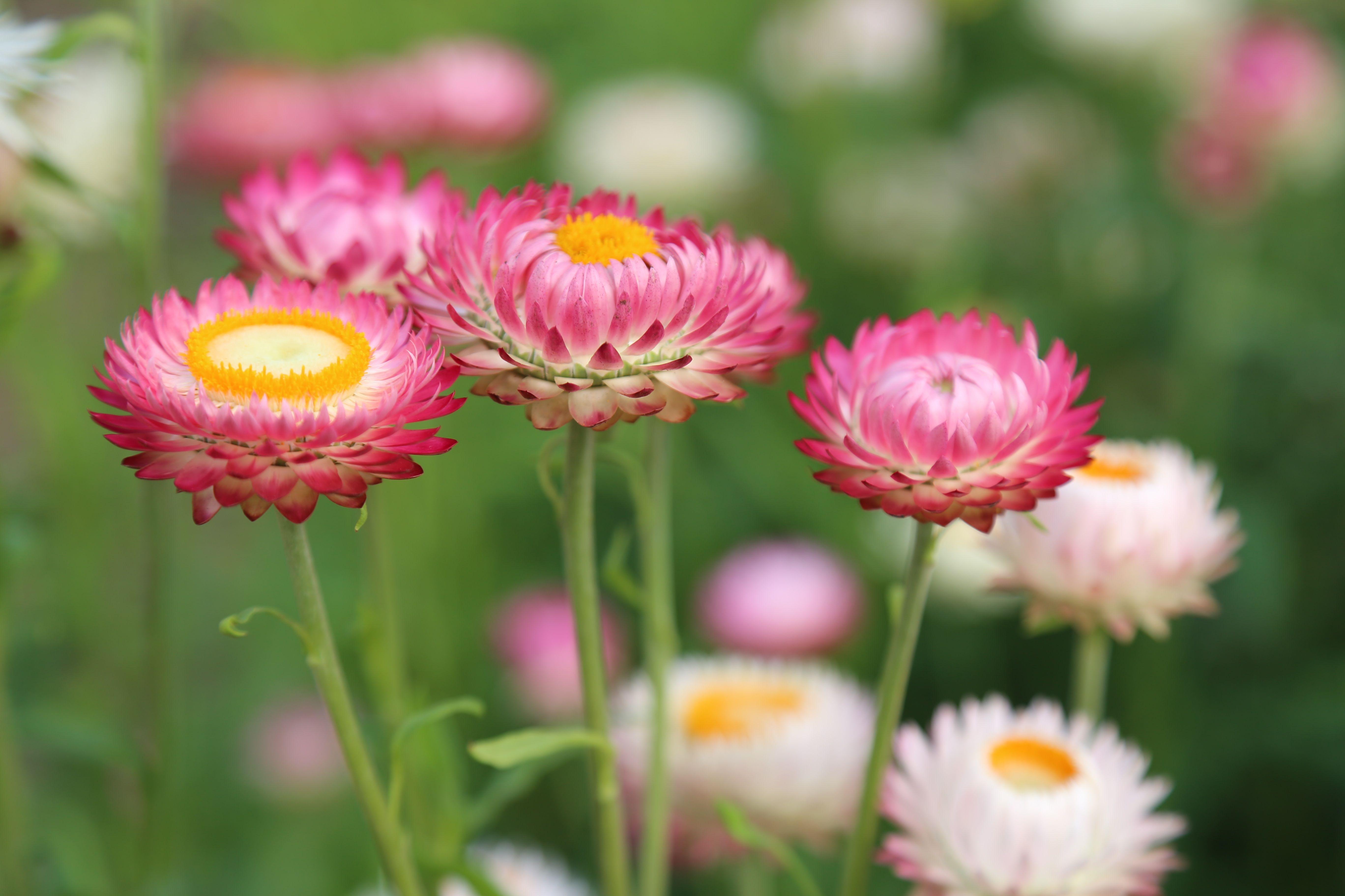 Pin by diana regina on flowers pinterest flowers