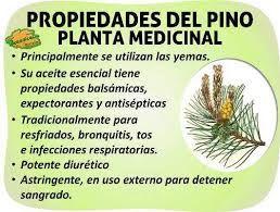 Image Result For Imagenes De Plantas Medicinales Y Sus Nombres Y