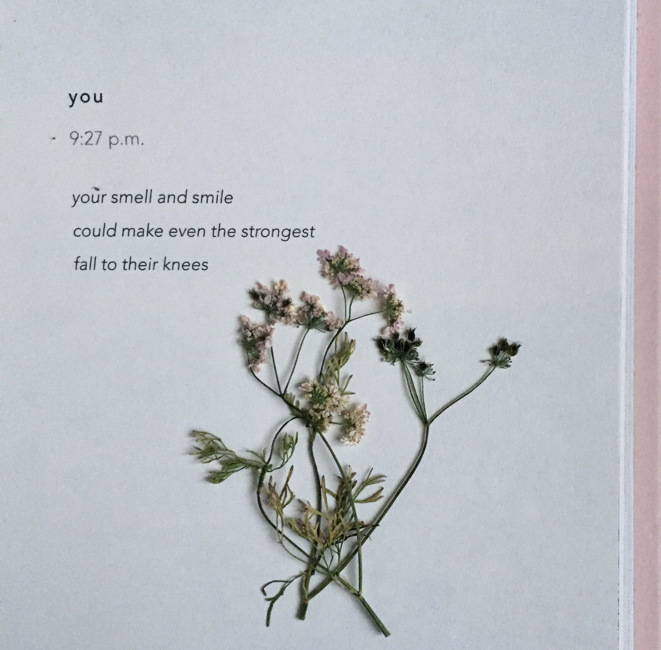 Quotes About aster Flower – fnmag