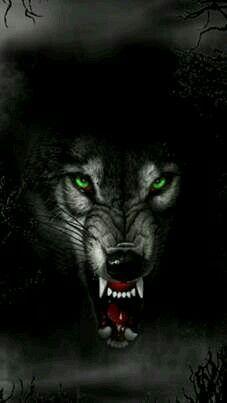 Pin By Madziaaaak80 On Wilk Pinterest Wolf And Animal