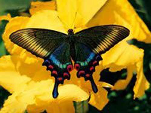 Jardin des Papillons à Hunawihr en Alsace
