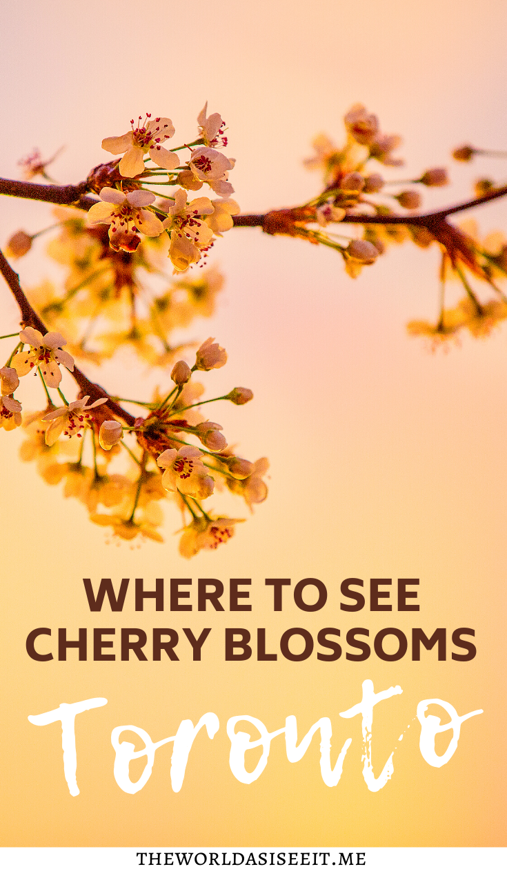 Where To Find Cherry Blossoms In Toronto The World As I See It Canada Travel Toronto Travel Canada Travel Guide