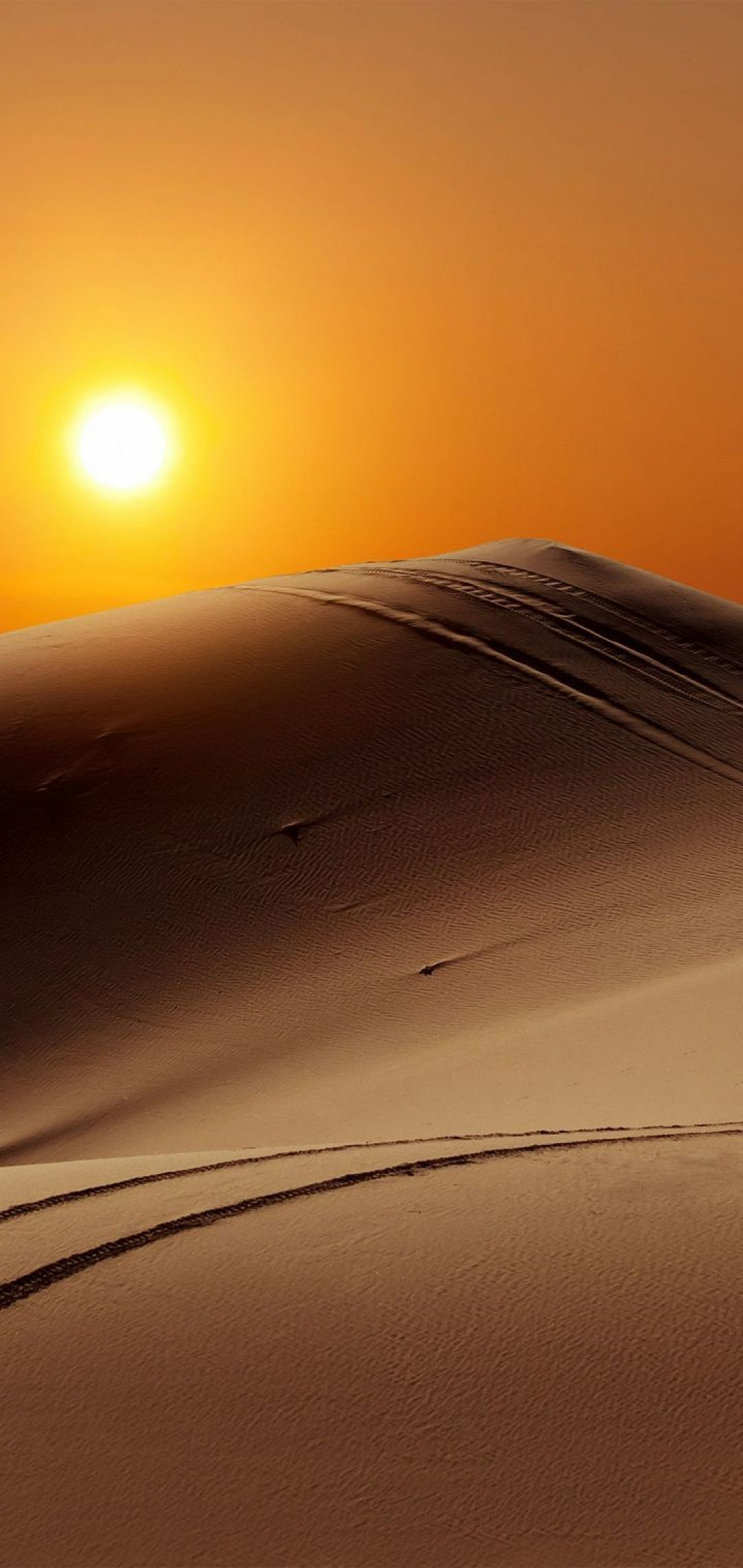 ✅[40+] Desert Camel - Android, iPhone, Desktop HD Backgrounds / Wallpapers (1080p, 4k) (1080x2280) (2020)