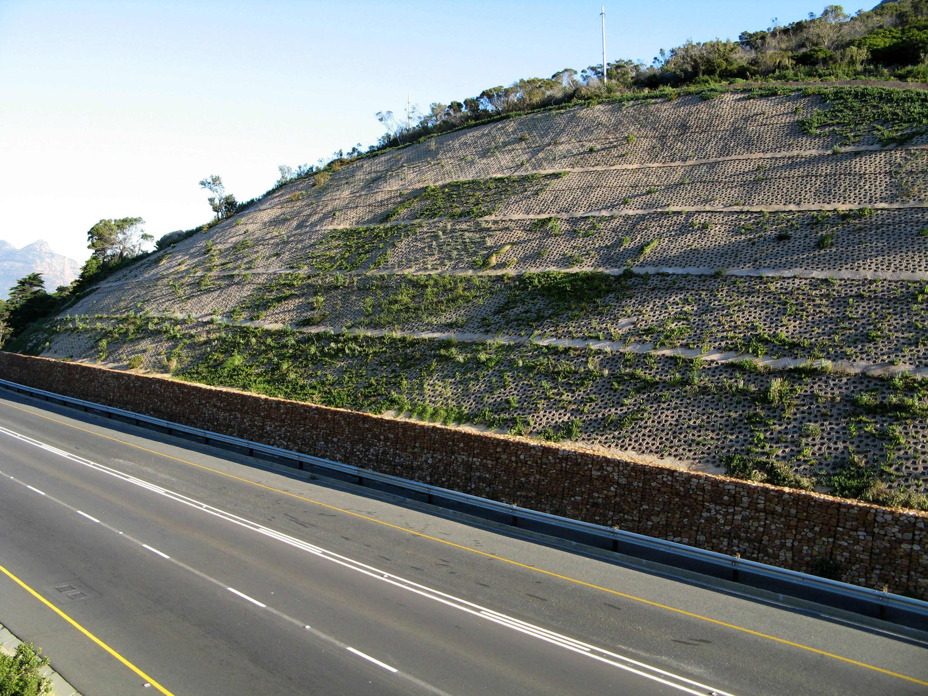 Vegetation takes hold on the Retaining Wall