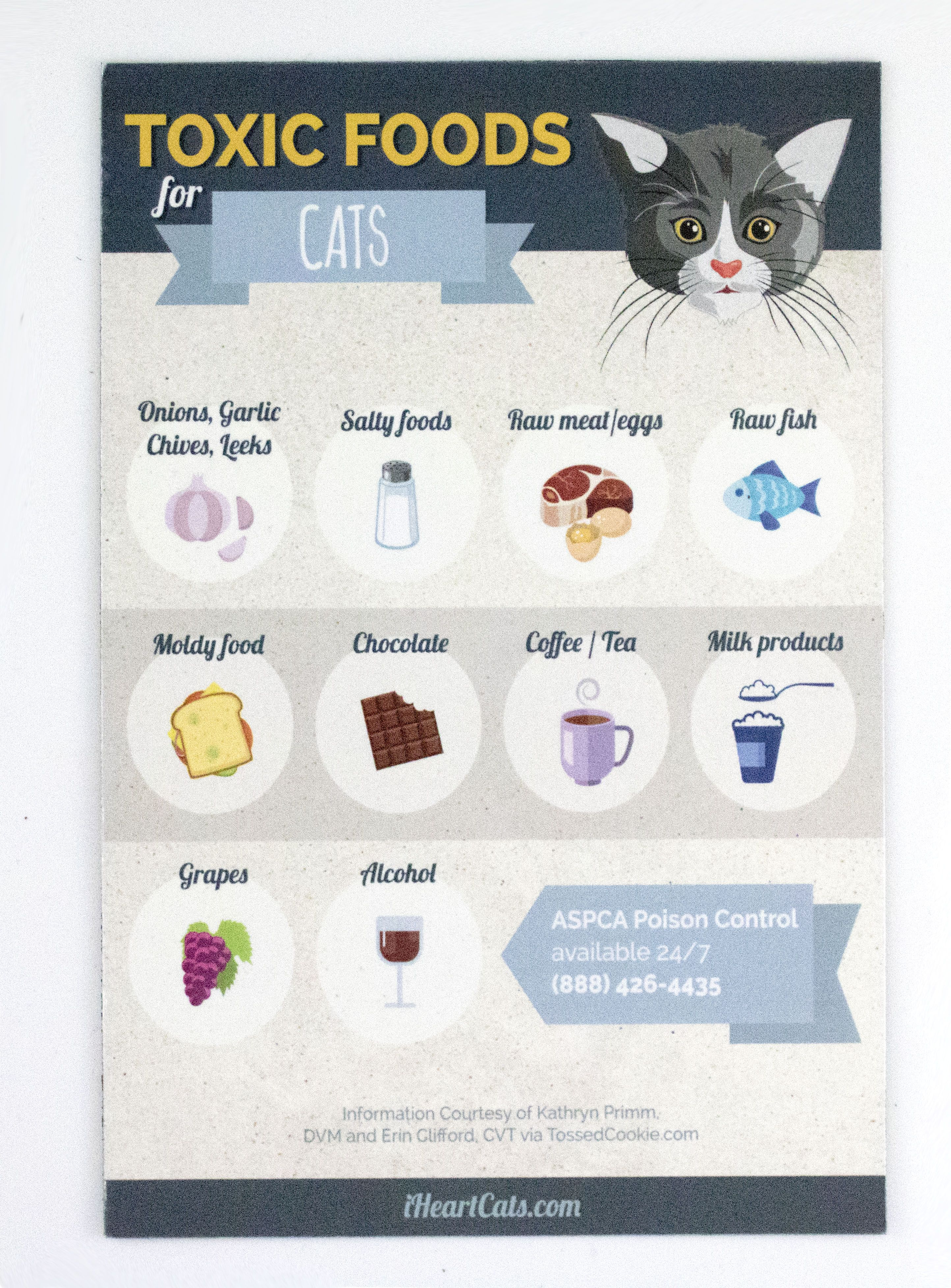 Toxic Cat Foods Magnet Cat Food What Cats Can Eat Kitten Care