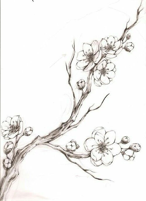 Pin By Kirsty Evans On Projekt Flower Drawing Tree Sketches Cherry Blossom Drawing