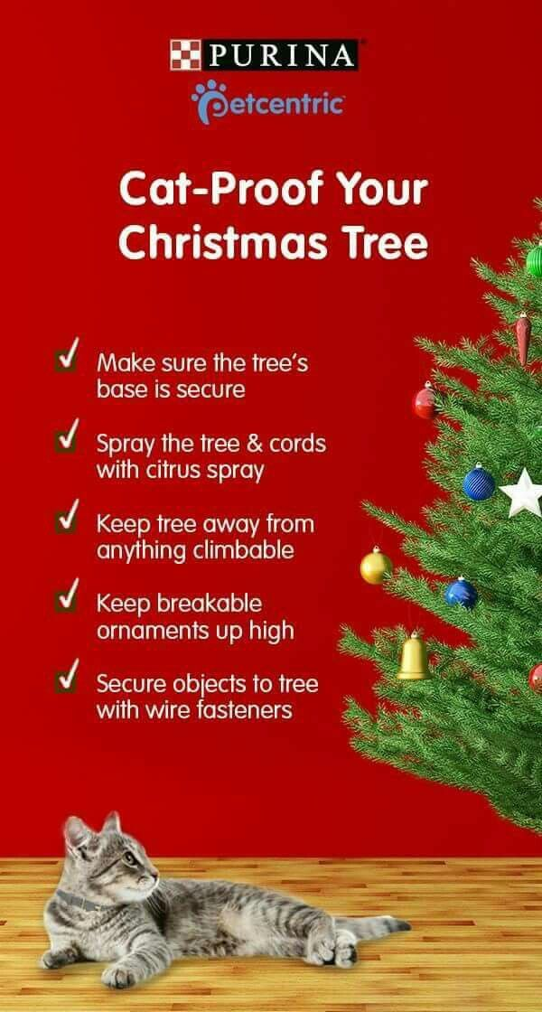 How To Cat Proof Your Christmas Tree.Cat Diy Life Hack Cat Proof Your Christmas Tree Cat