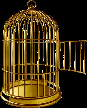 Golden Bird Cage Bird Cage Cheap Bird Cages Vintage Bird Cage