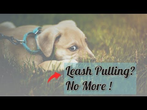 How To Train A Dog To Walk On A Leash Youtube Dogs Dog Books