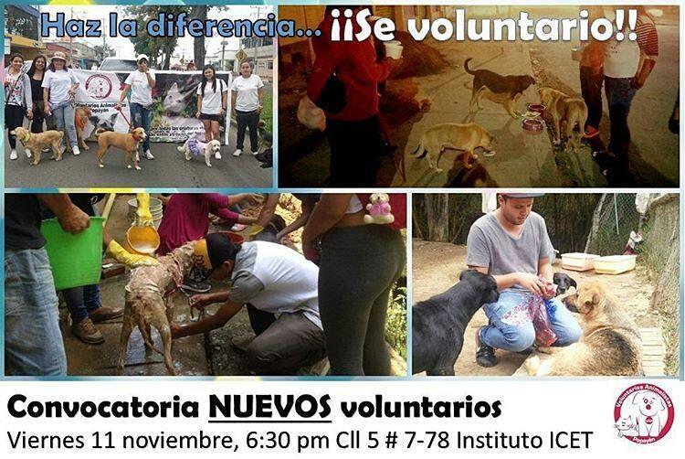 """@animalistaspopayan """"Ser voluntario te cambia la vida""""... Los invitamos a ser parte de la fundación VOLUNTARIOS ANIMALISTAS POPAYÁN para que asistan a nuestra reunion de inducción el próximo viernes en el Instituto ICET Calle 5 #7-78 Sector Histórico a las 6:30 pm. Porque juntos podemos hacer muchísimo más!  #Popayán #Cauca #Colombia #animalistas #voluntarios #amoranimal"""