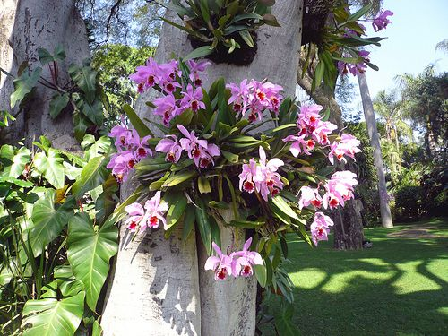 Orchids At Las Mananitas Epiphytes Are Air Plants That Live On