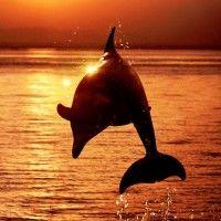 Силуэт с дельфином в прыжке над морем во время заката # ...