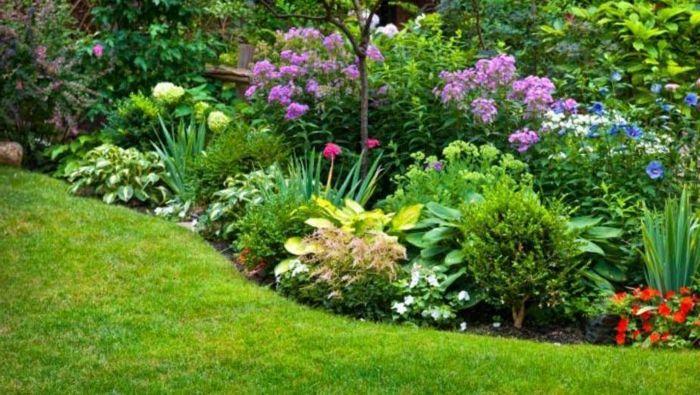 Ein Blumenbeet Mit Lila Und Rote Blumen, Grüner Rasen, Gartenideen Für Wenig  Geld