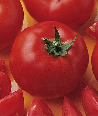 Early Girl Tomato.  Earlier, yummier, extra large, very productive, what more can you ask for in a tomato plant?