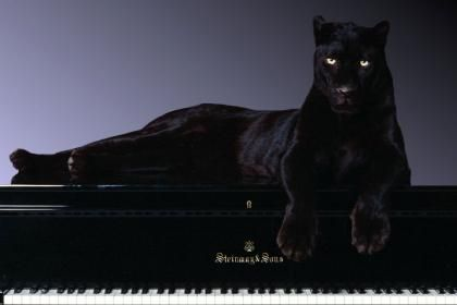 on piano panther Black