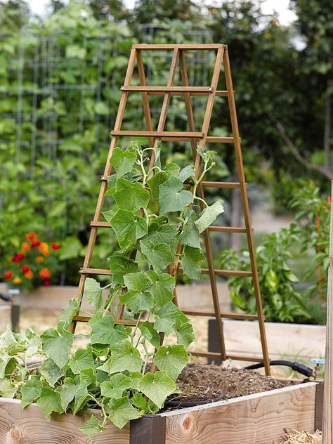 Vertical Vegetable Gardening | garden trellis | Pinterest | Vertical ...