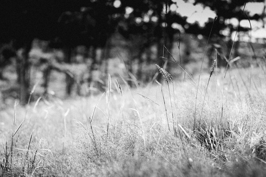 The grass field by chikietluu