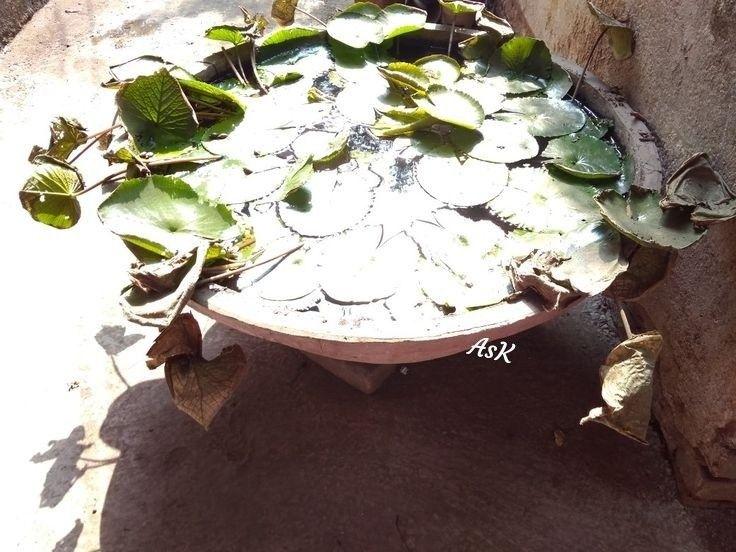 #photography #photos #pond #nature #myshot #suneffect #sunlight