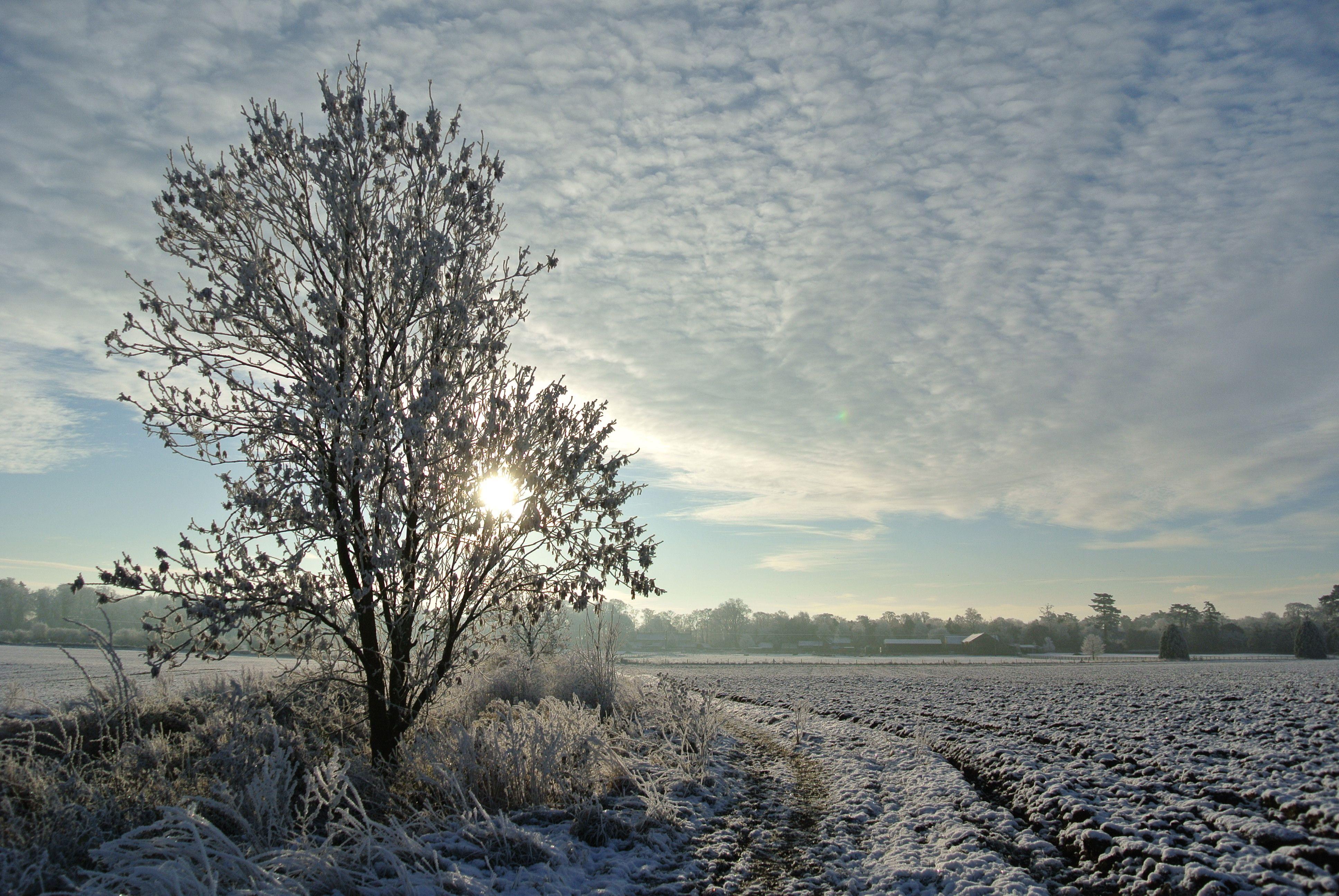 One Snowy Day Bea Broadwood