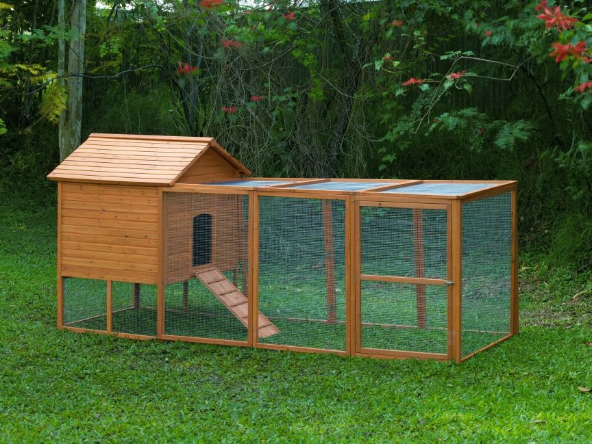 Building a chicken coop free range vs chicken run for Chicken coop size for 6 chickens