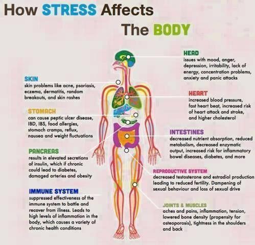 You will want to stop stress in its tracks! http://www.webmd.com/balance/ss/stop-stress-now?ecd=wnl_lbt_100515&ctr=wnl-lbt-100515_nsl-ld-stry_title&mb=ocn7dNOStAHPm0mAKE/iKyhonS/H3cwytZ6H5Qru8CA%3D&utm_content=buffer46a62&utm_medium=social&utm_source=pinterest.com&utm_campaign=buffer #stress #relievestress #blissfulsinglemom   Reverse the affects of stress…