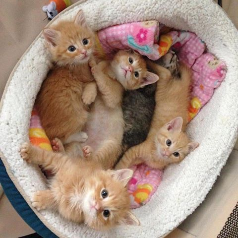 5 Kitten Videos To Get You Through The Cold Weather Blues #gingerkitten