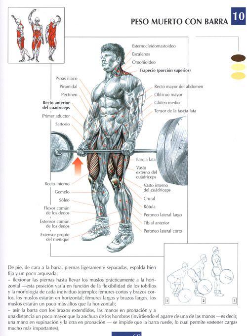 Sin Mas Vueltas Les Posteo Distintos Ejercicios Para Cada Grupo Muscular Al Final Del Post Agrego Ru Weight Training Workouts Fitness Body Fit Board Workouts