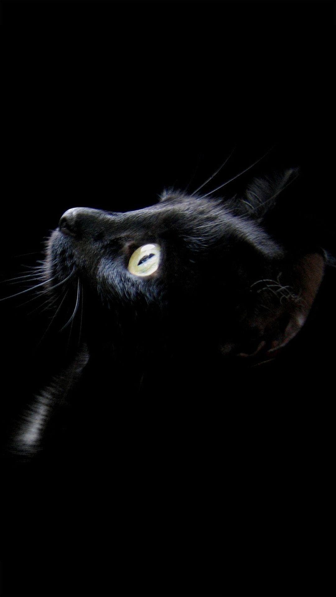 Cat Phone Android Iphone Desktop Hd Backgrounds Wallpapers 1080p 4k 101583 Hdwallpapers Androidwallpapers Iphonewal Cat Wallpaper Black Cat Cats