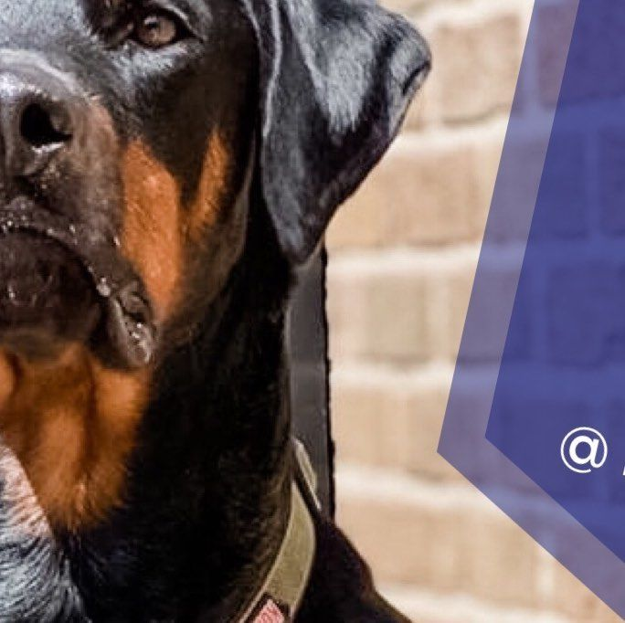 Check Out Our Bio Page For Full Pic Dm Or Tag Is In Your Pet S Photo For A Chance To Be Featured Featuredpet Idr Is Fea In 2020 Doberman Rescue Doberman