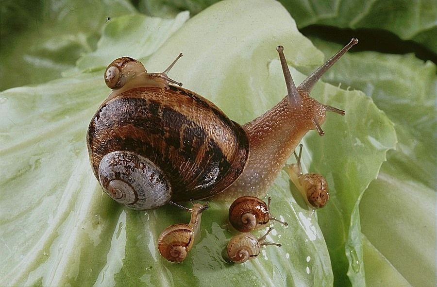 Totally Cool Snail Family Of The Day Petslady Com Animals