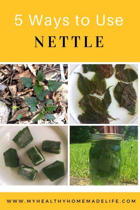 Nettle 8oz Simples Tonics