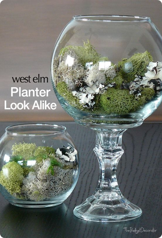 Diy Dollar Store Terrarium Use A Dollar Store Fishbowl And