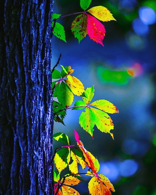 Best Photo Editing Backgrounds Download Nature Pictures Photo Background Images Beautiful Nature
