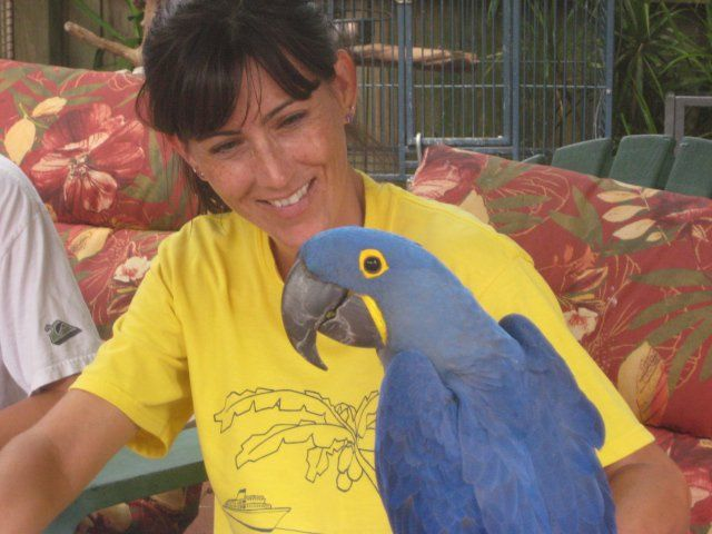 Volunteer And Blue Hyacinth Macaw Melbournebeach Florida Parrot Rescue Marsparrots Parrot Rescue Parrot Macaw
