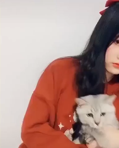 Cats React To Cat Filters