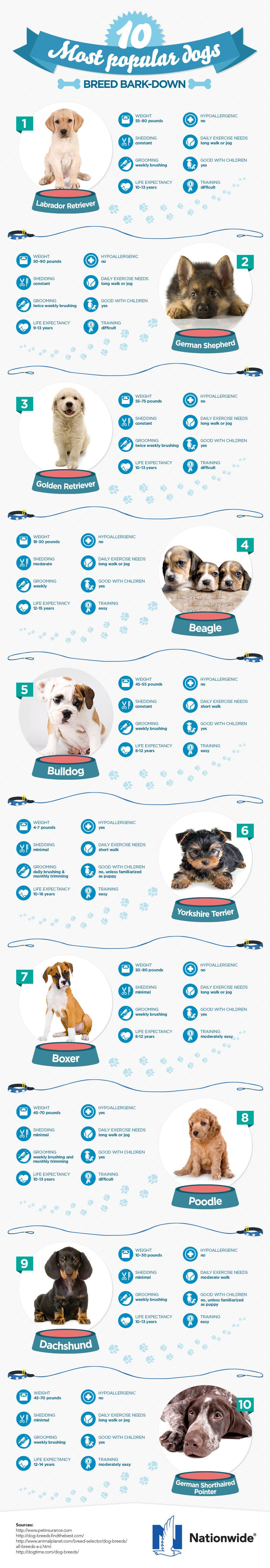 Most popular breeds (in the USA, I imagine.) Dog