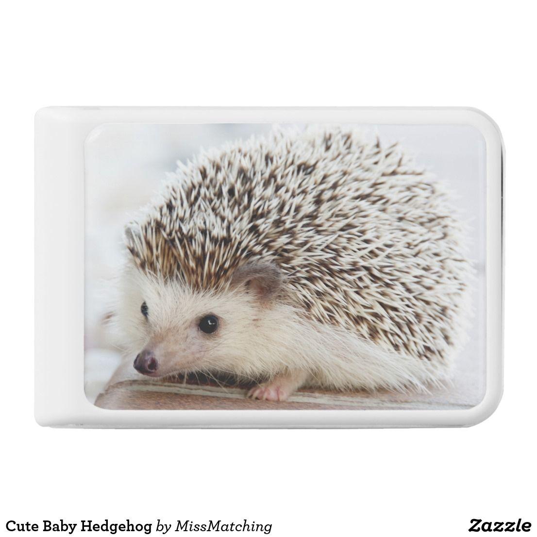 Cute Baby Hedgehog Power Bank | Zazzle.com