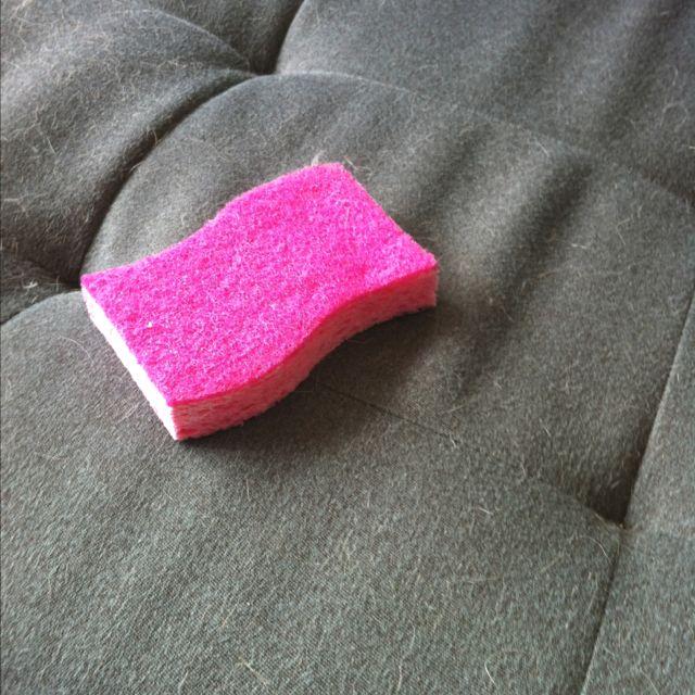 die besten 25 hundehaarentfernung ideen auf pinterest katzenhaare entfernen reinigung. Black Bedroom Furniture Sets. Home Design Ideas