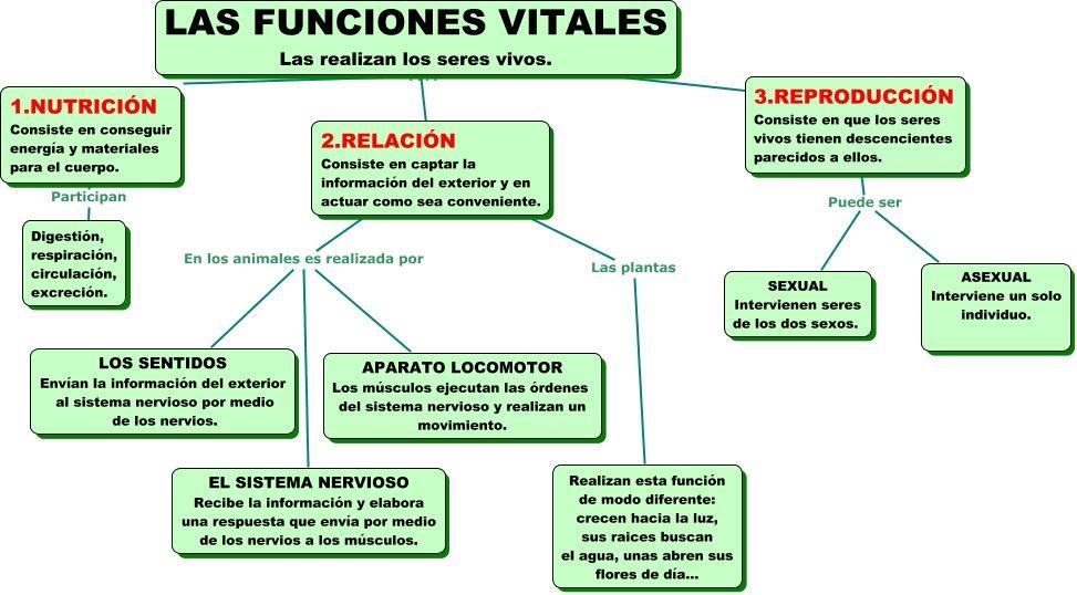 Las Funciones Vitales Ciencias De La Naturaleza Ciencia Natural Clase De Biología