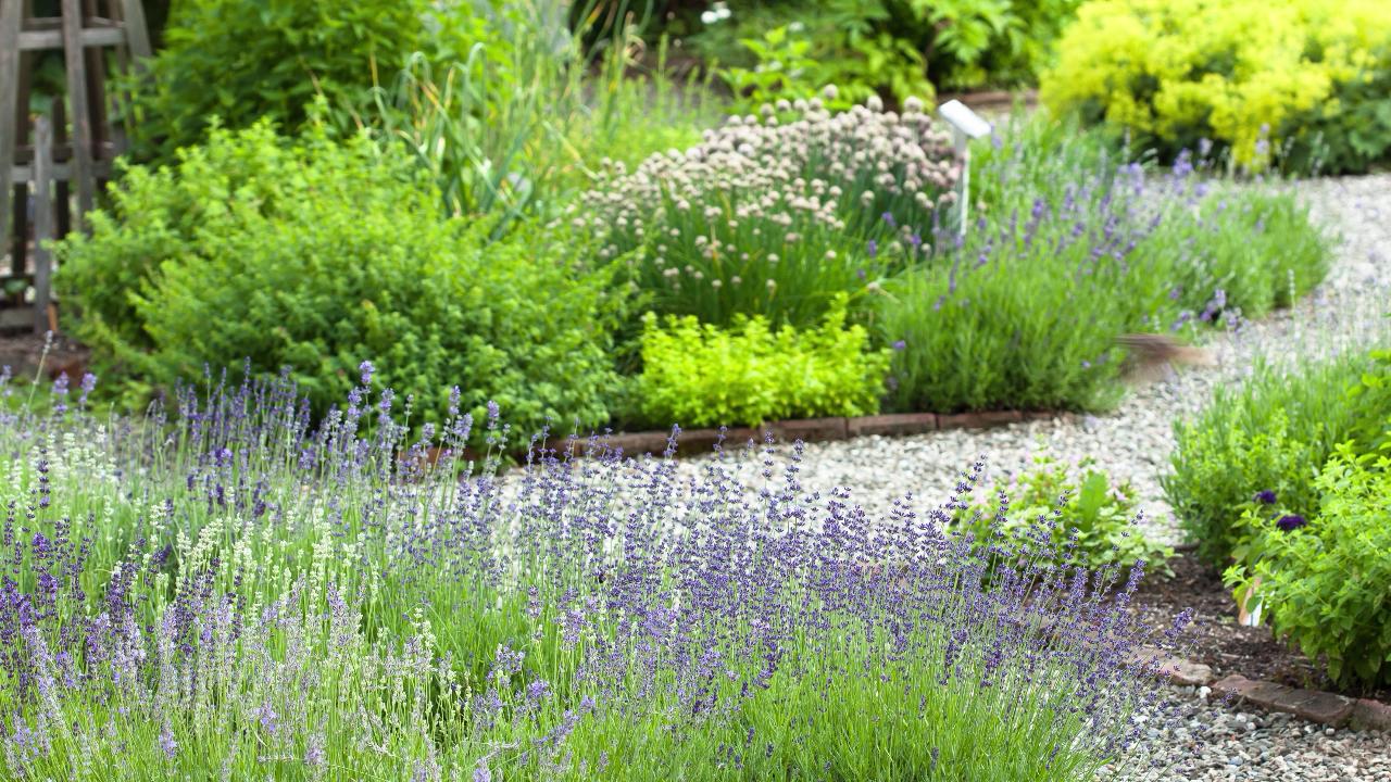 Photo of Come pianificare il tuo giardino delle erbe