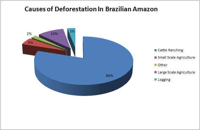 Impacts And Causes Of Deforestation In The Amazon Basin Amazon