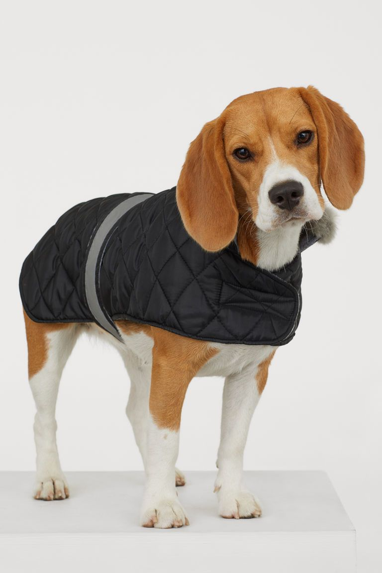 Quilted Dog Jacket Dog Jacket Dogs Animals